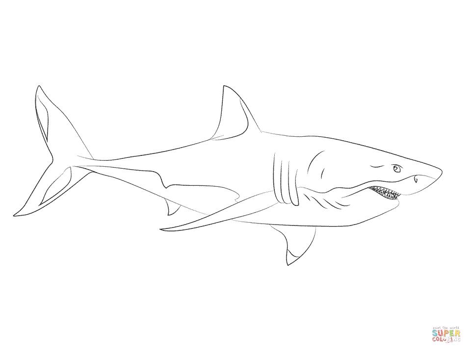 Ziemlich Weißer Hai Anatomie Zeitgenössisch - Anatomie Ideen ...