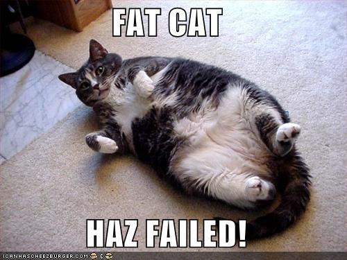 Pin On My Fat Cat Obsession