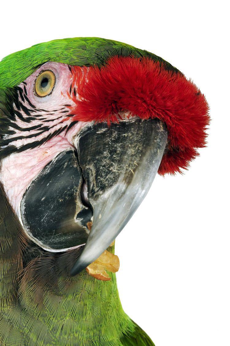 Ten Things To Know Before Adopting A Pet Bird Parrot Pet Birds
