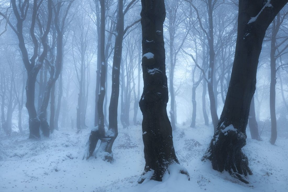"""November Snow - Misty beech forest with first snow in late autumn.  <a href=""""http://www.facebook.com/pages/Tobias-Richter-Photography/163099510390531"""">Follow me on FACEBOOK</a> <a href=""""https://www.instagram.com/richterphotographie/"""">Follow me on Instagram</a>  <a href=""""http://www.richterphotographie.de"""">www.richterphotographie.de</a>"""