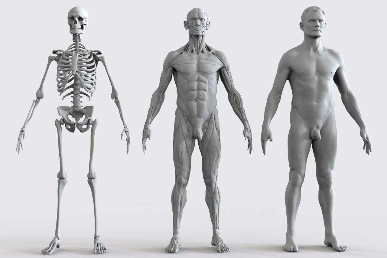 Anatomy 360 — Male weight bearing scans in motion   | FD 1: Figure
