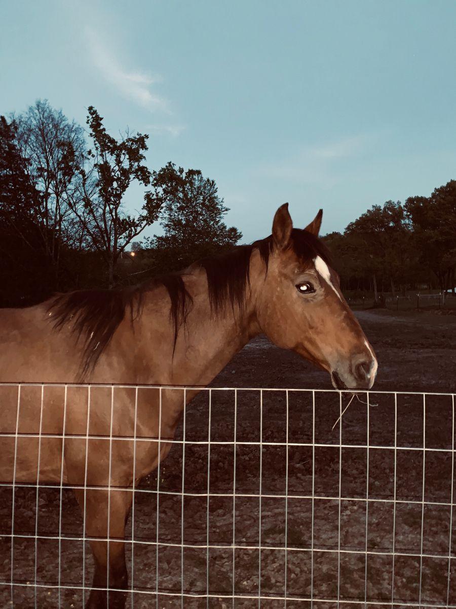 Little Ellie Mae In 2020 Horse Life Horse Photos Horses