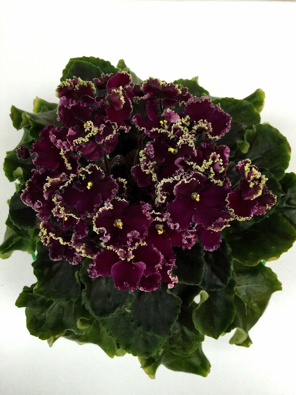 Растения ставропольский край фото описание стильные