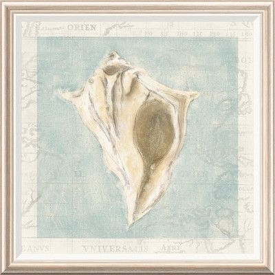 "Global Gallery 'Framed Shells III' by Gaetano Framed Graphic Art Size: 34"" H x 34"" W x 1.5"" D"