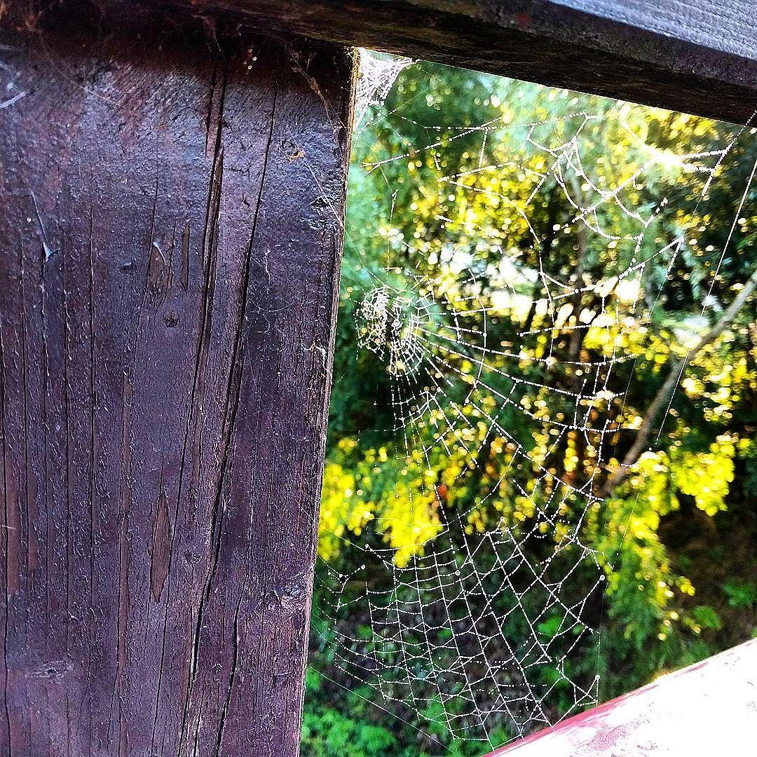 Son unas currantas. #araña #telaraña #spider #web #spiderweb #puente ...