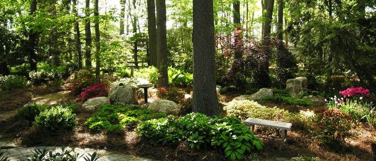 Woodland And Shade Gardens – Hanselman Landscape And Gardens