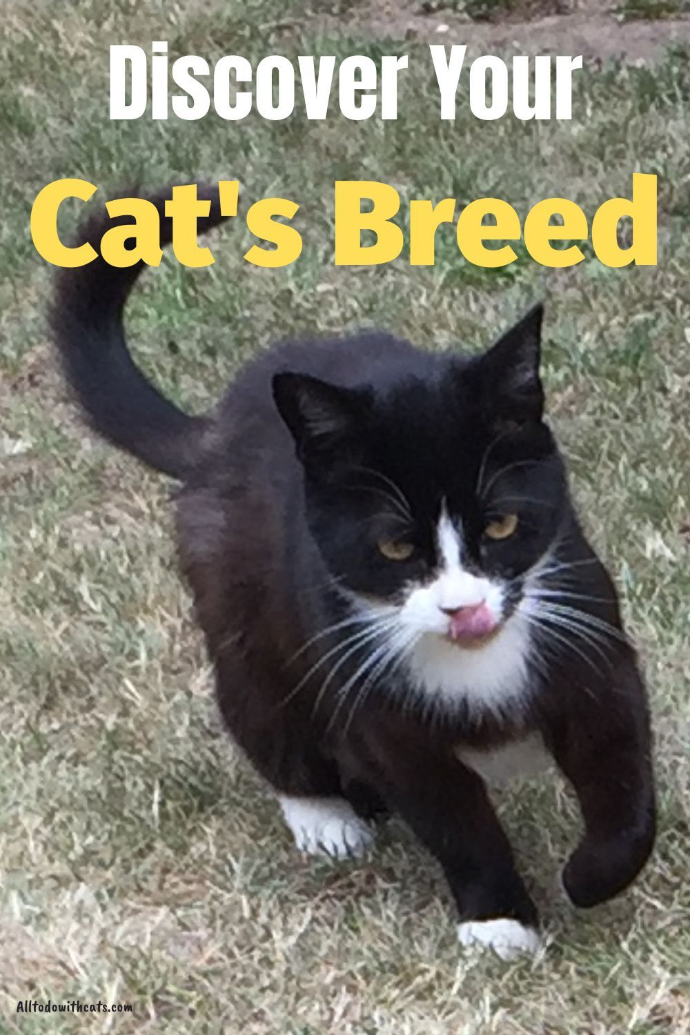 What Breed Is My Cat Find Out What Type Of Cat You Have In 2020 Cat Breeds Cat Facts Cats