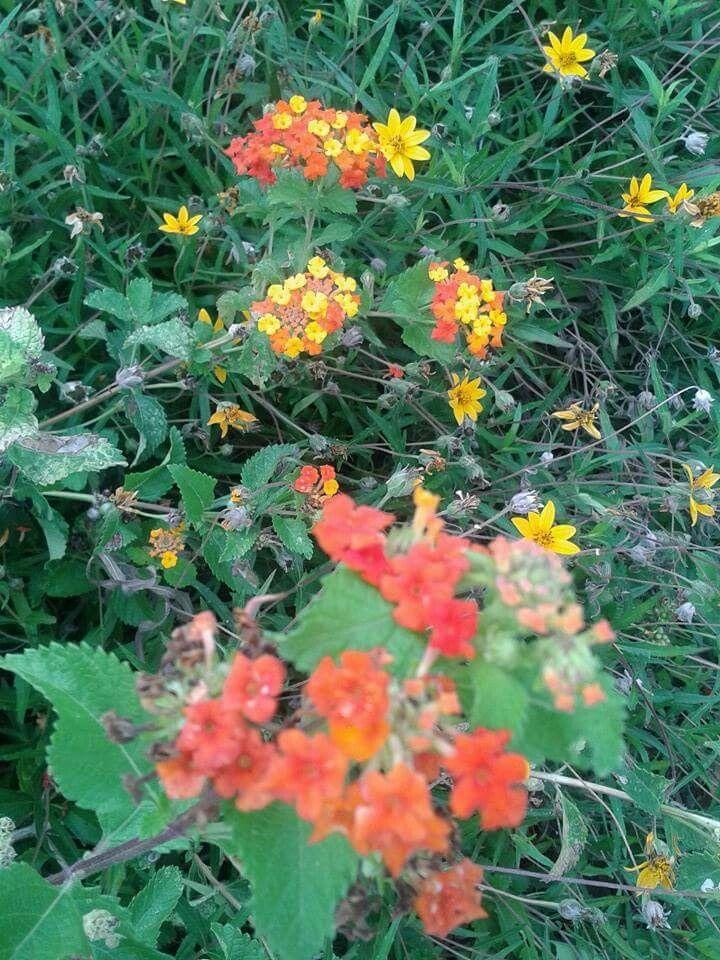 Wild flowers at white rock lake dallas tx dallas flowers and wild flowers at white rock lake dallas tx mightylinksfo