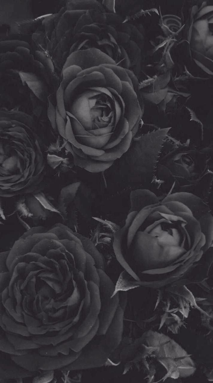 Wallpapers For Iphone 7 Spring Even Wallpaper Iphone X True Black Nor Trippy Wallpapers For Black Roses Wallpaper Flower Background Iphone Cool Black Wallpaper