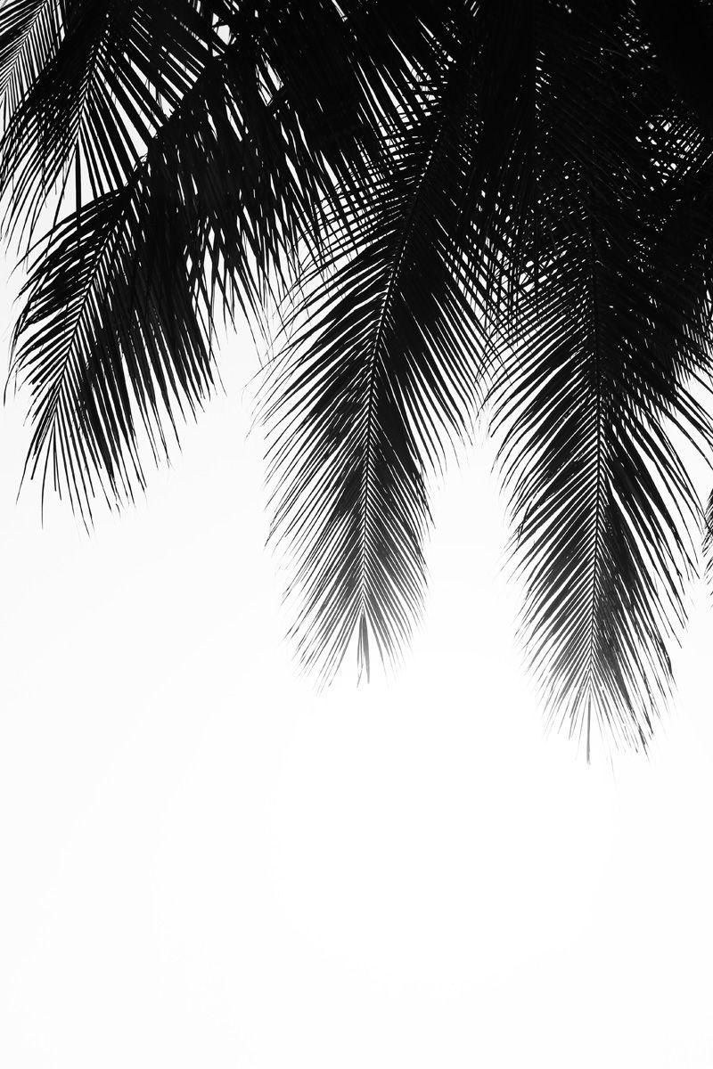 palm leaves tropical wei bilder schwarz weiss bilder handy hintergrund. Black Bedroom Furniture Sets. Home Design Ideas
