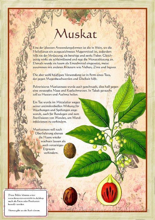 Bilder Aus Dem Buch Alte Heilkra Uter Zeichnungen Pflanzen Heilpflanzen Krauter Pflanzen