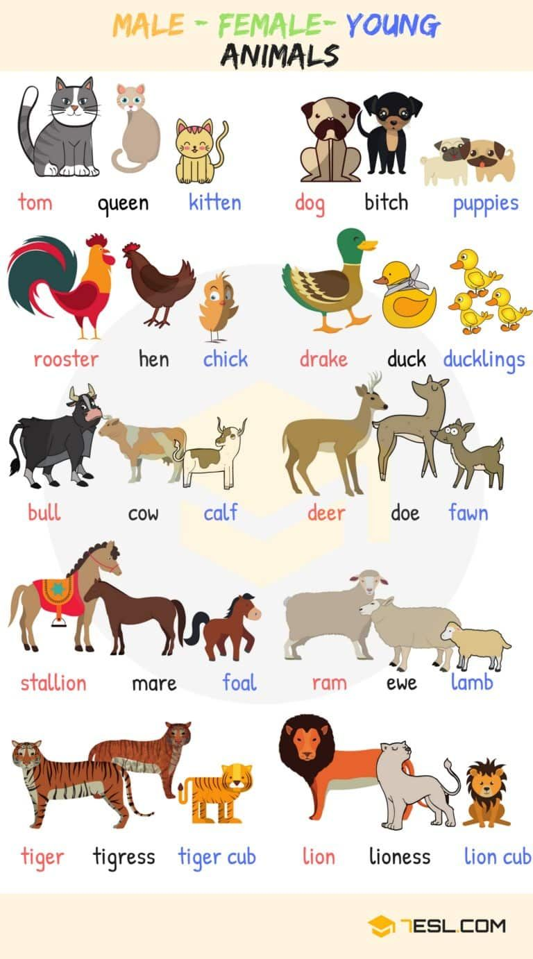 Male Female Baby Animal Names In English With Useful Images 7 E S L Animals Name In English Kids English English Language Learning