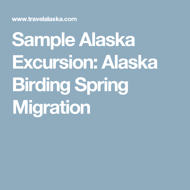 Sample Alaska Excursion: Alaska Birding Spring Migration