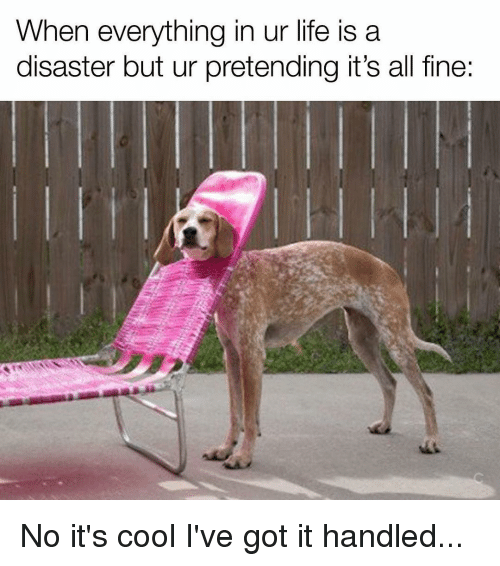 Image result for everything is fine but meme Dog