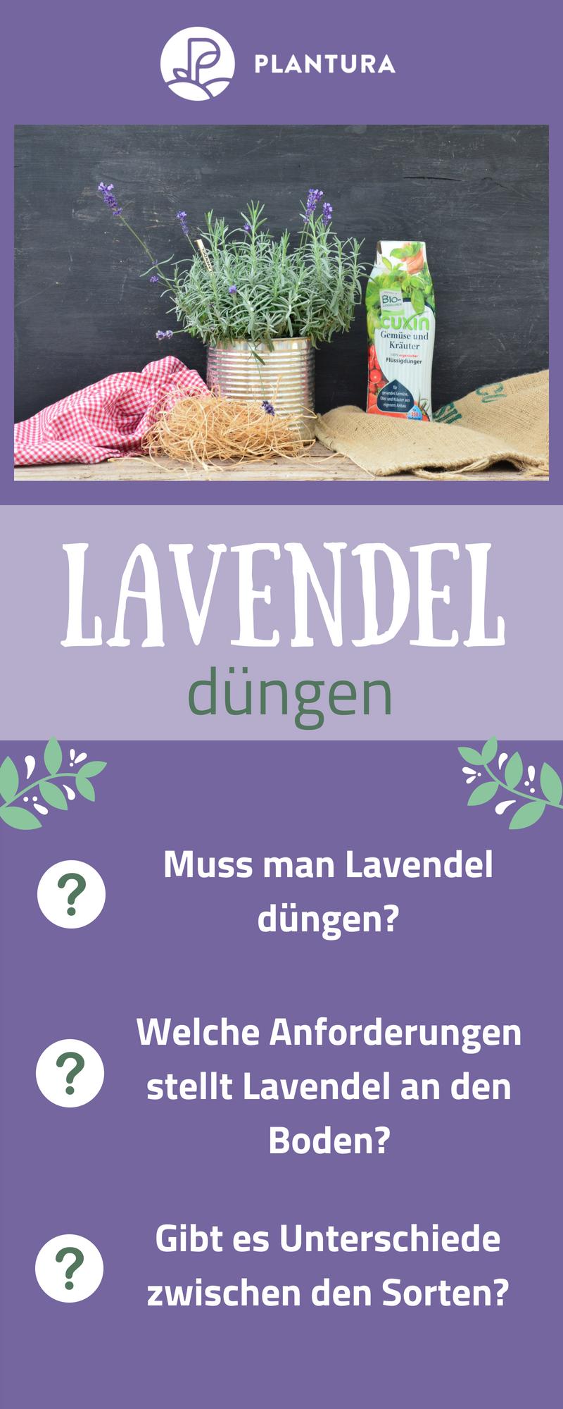 lavendel schneiden wann und wie zur ckschneiden garten garten lavendel garten und lavendel. Black Bedroom Furniture Sets. Home Design Ideas