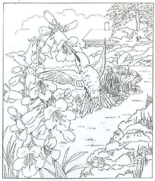 Animals Coloring Pages Hummingbird Bird Coloring Pages Animal Coloring Pages Coloring Pages Nature
