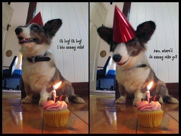 100 Ultimate Funny Happy Birthday Meme S 3 Maggie S Board 3
