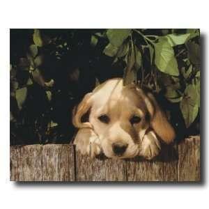 Labrador Retriever Home Decor Yellow Lab Puppy Dog Looking Over
