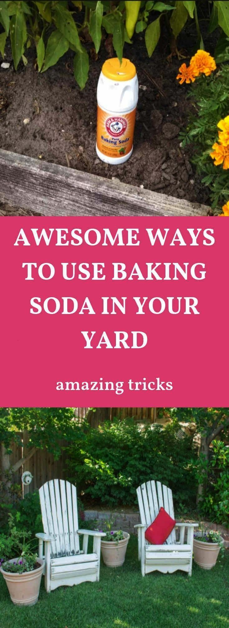 #combaking #reason #garden #baking #house #great #about #find #haha #soda #the #why #see #outGreat. Find out about Baking Soda Garden see the reason why. HAHA.    Com...#bakingGreat. Find out about Baking Soda Garden see the reason why. HAHA.    Com...#baking  Fleas, ants, and roaches are one of the most common and most annoying pests. Although there are various products on the market which are said to kill them off, most of them are packed with chemicals which do more harm than good. If ...