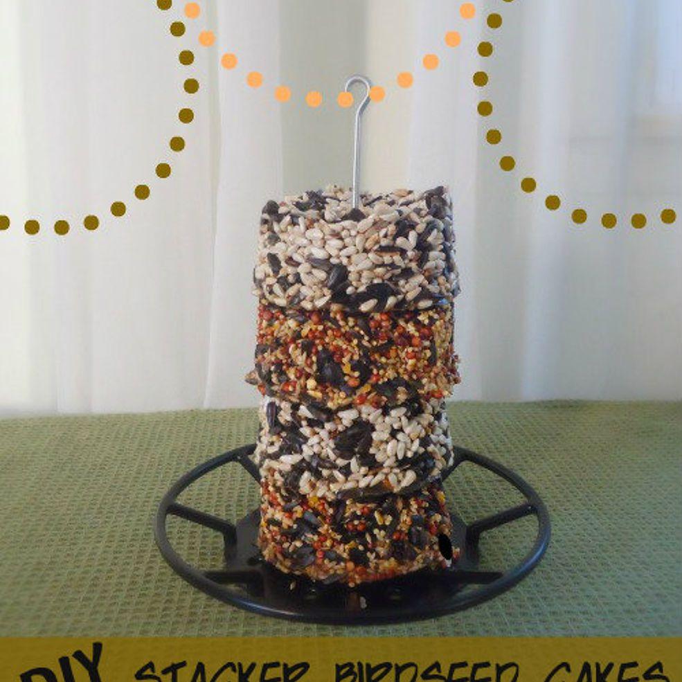 Diy birdseed cakes for bird feeders bird seed bird