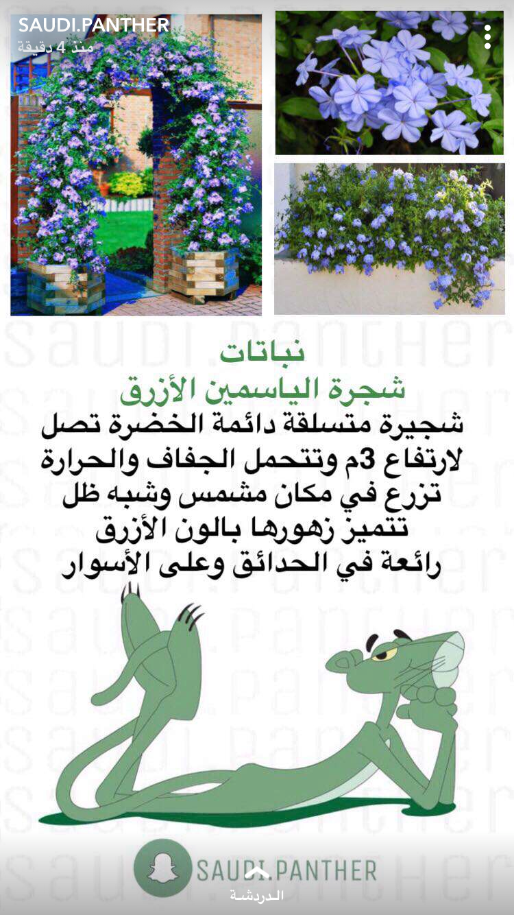 Pin By M On نباتاتا Tiny Garden Ideas Trees To Plant Planting Herbs