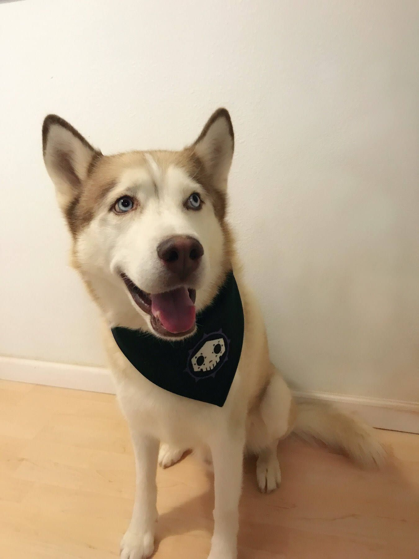 Sombra Inspired Overwatch Dog Bandana Handkerchief By