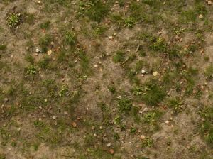 Mixed ground texture containing few dry leaves in partly-dry