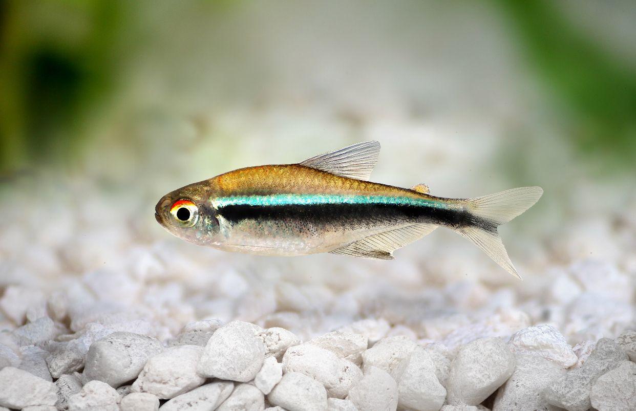 tetra fish food amazon
