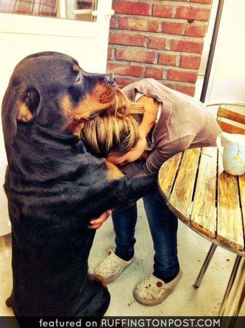 A Loving Rottie hug - http://www.ruffingtonpost.com/loving-rottie-hug/