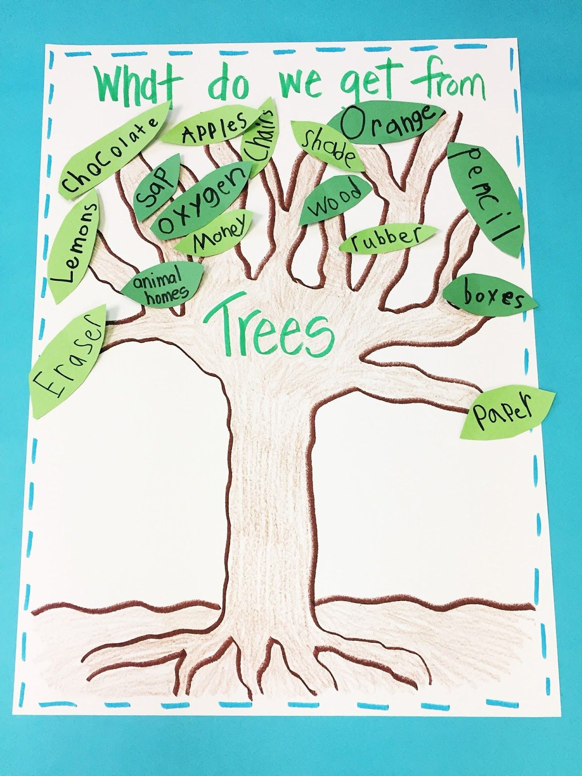 Learning About Trees | Tree study, Creative curriculum ...