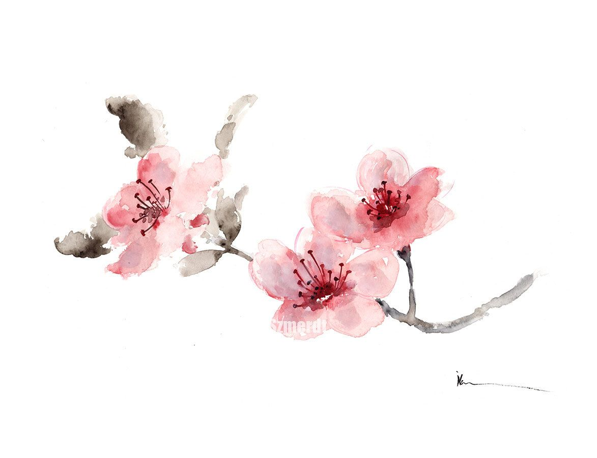 Cherry Blossom Branch Original Watercolor By Colorwatercolor