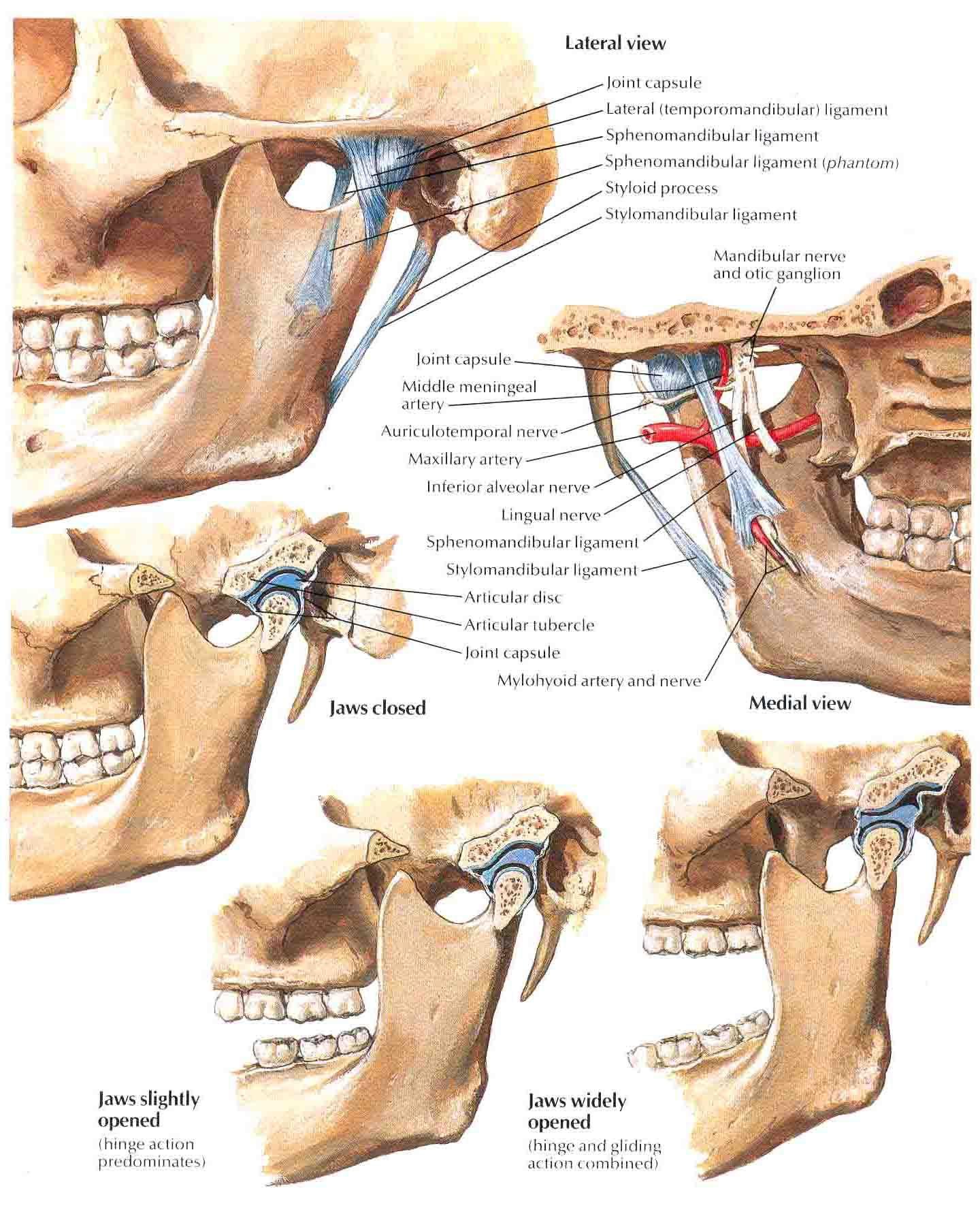 Temporomandibular Joint picture: temporomandibular joint disord ...