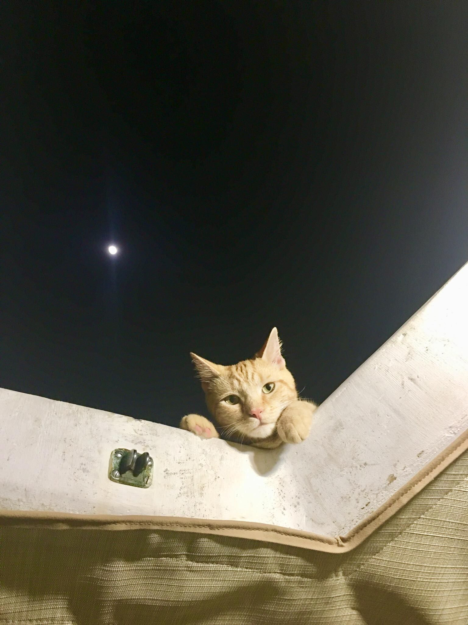 Meet Captain Ahab Our New Sailor Cat Who Will Sail