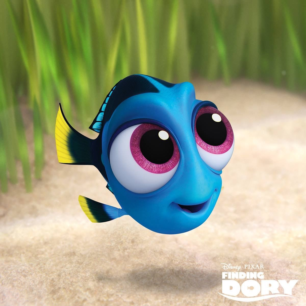 Baby dory disney pinterest disney drawings dory for Immagini dory