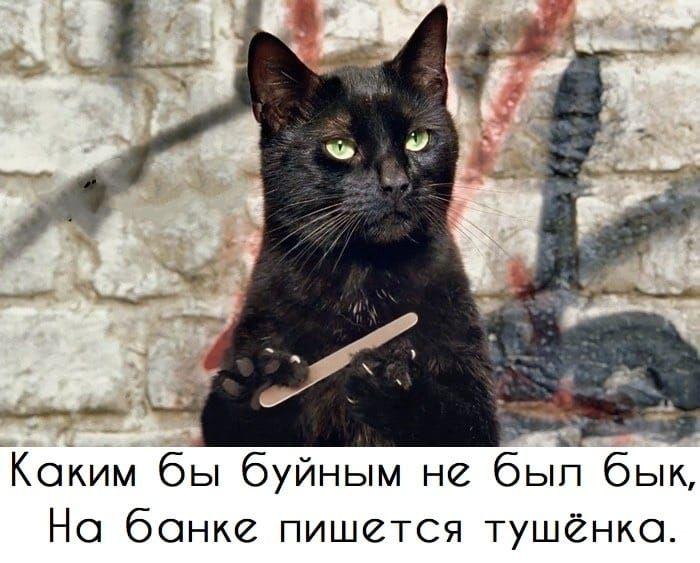 решила гифка черная кошка пилит ногти при входе