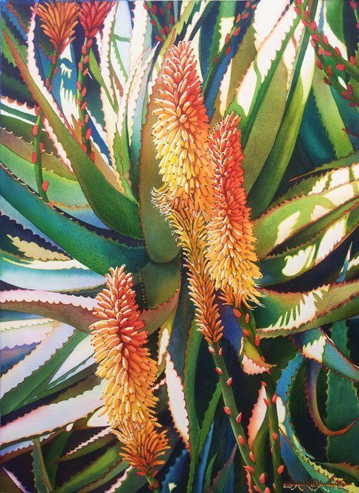 Savila en flor aloe y vera 55 x 75cm, Robert C. Murray