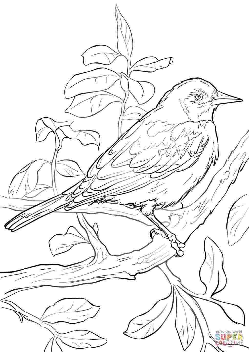 Baltimore Orioles Baseball Coloring Pages 9999 Printable