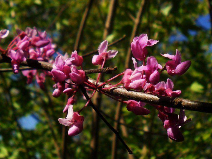 Spring brings natural bling!