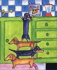 Pin By Heather Earl On Animals Dachshund Dapple Dachshund Puppy