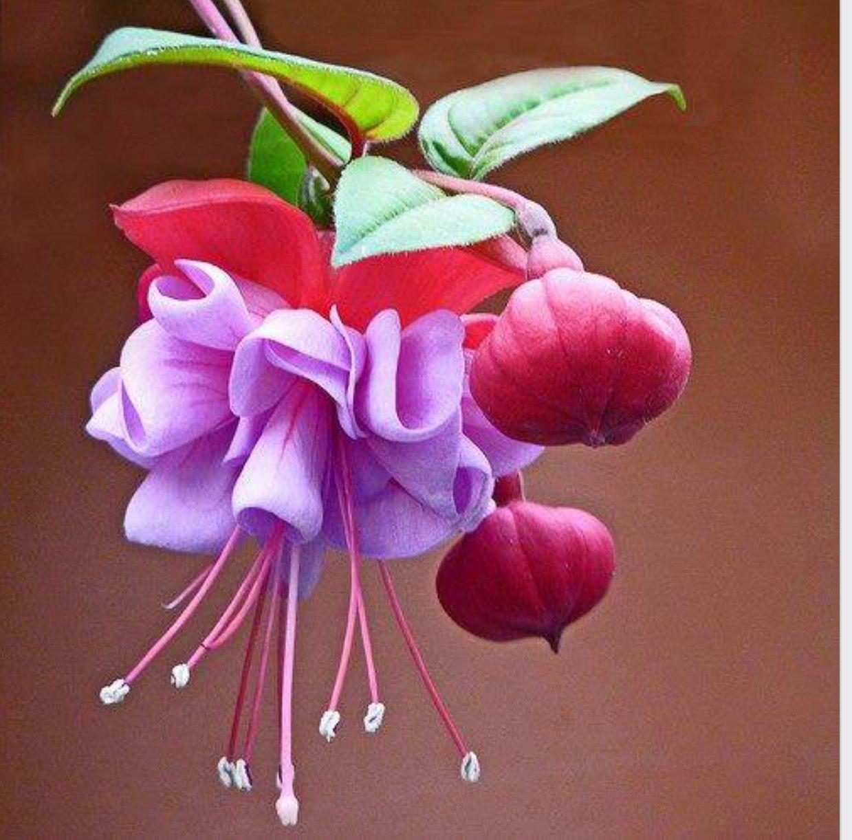 Pin By Leyla Ersoy On Eitli Bitkiler Pinterest Flowers Plants