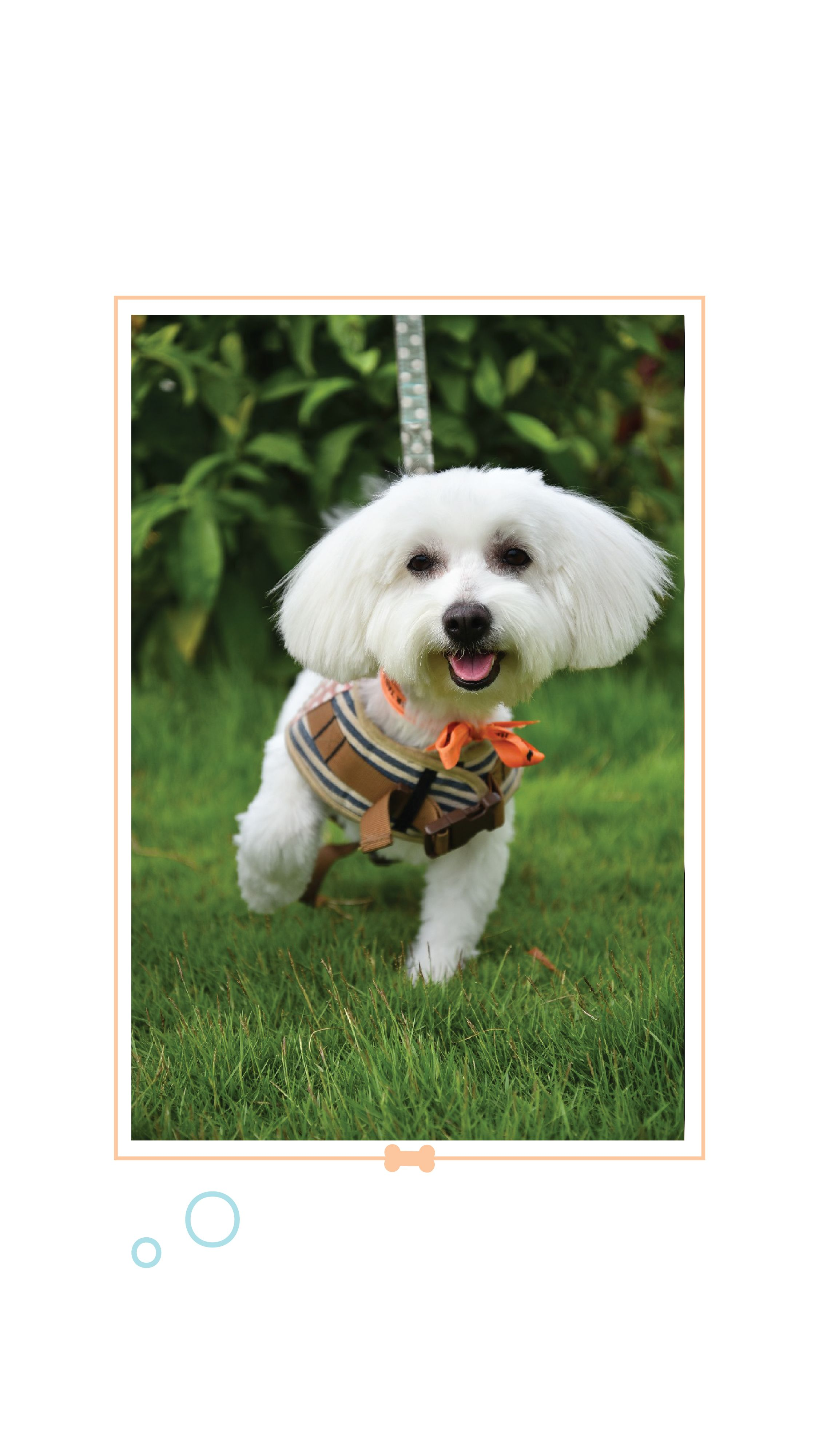 Spa For Dogs Headsupfortails Buy Pets Online Pet Supplies Dogs