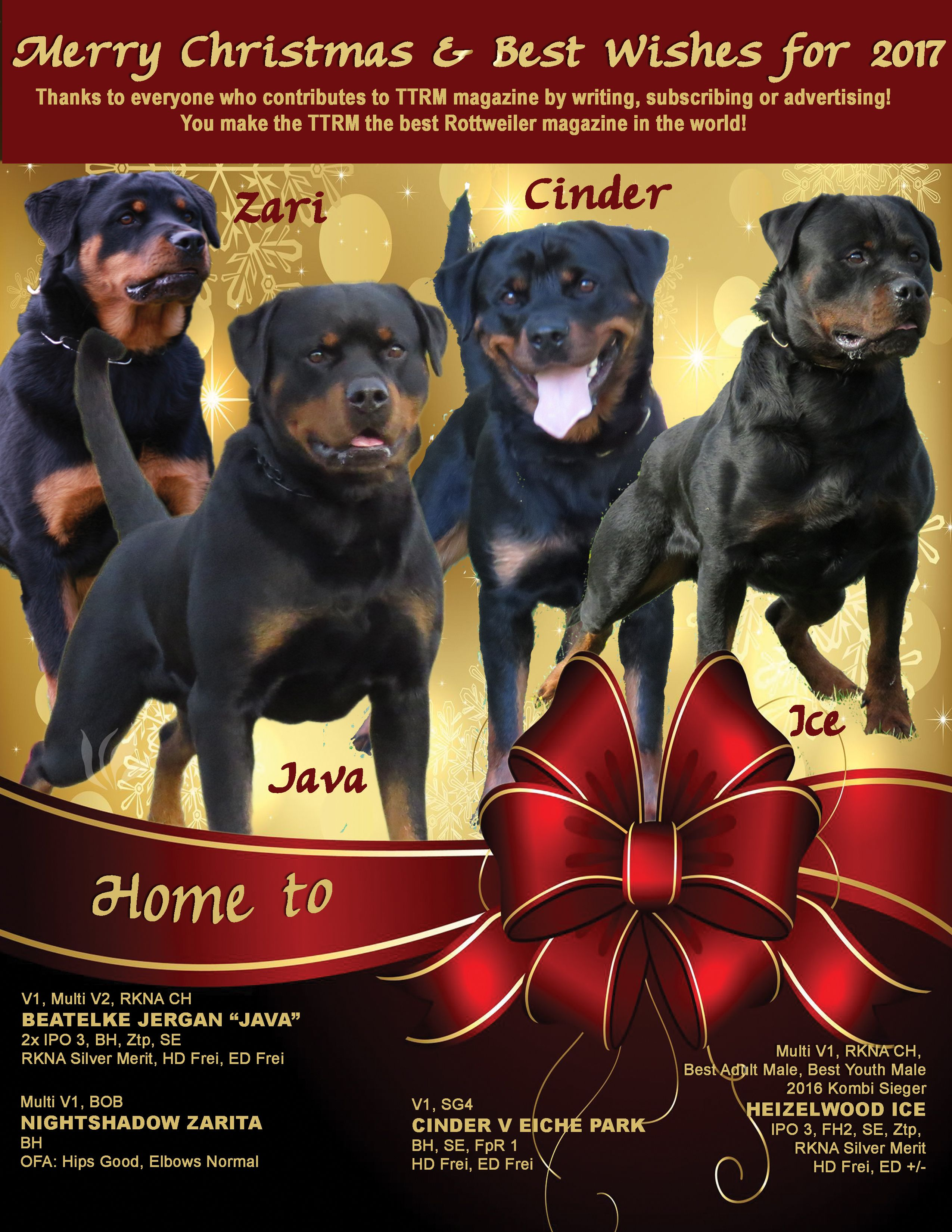 Pin By Garen On Rottie Christmas Stud Dog Rottweiler Rottie