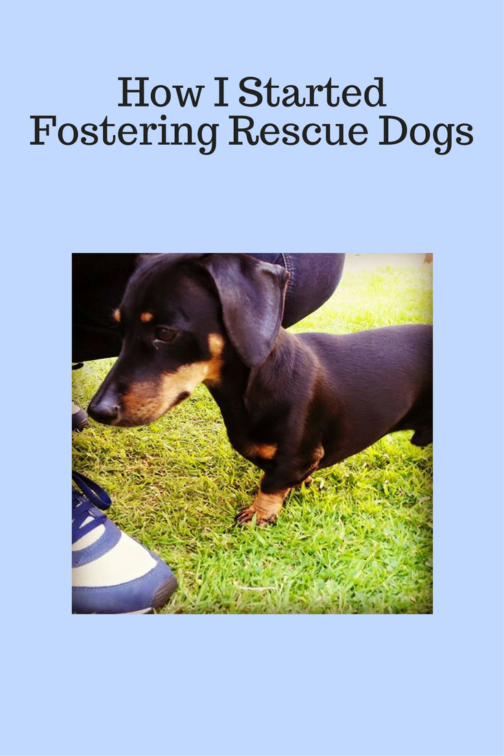 Rescue Dog Fostering | Rescue dogs, Dogs, Dog books