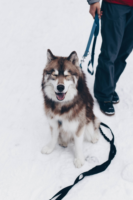 Rodeln Mit Hund Rinner Alm Sport Mit Hund In Tirol Wintersport
