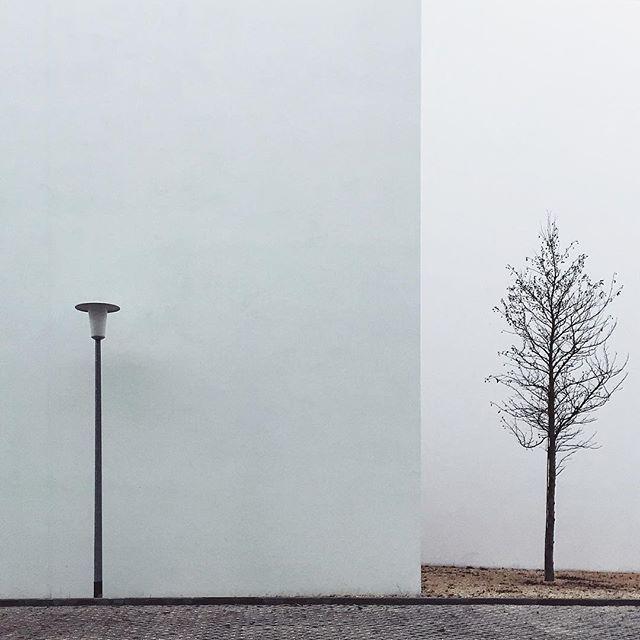 #berlin/ Laterne trifft Baum