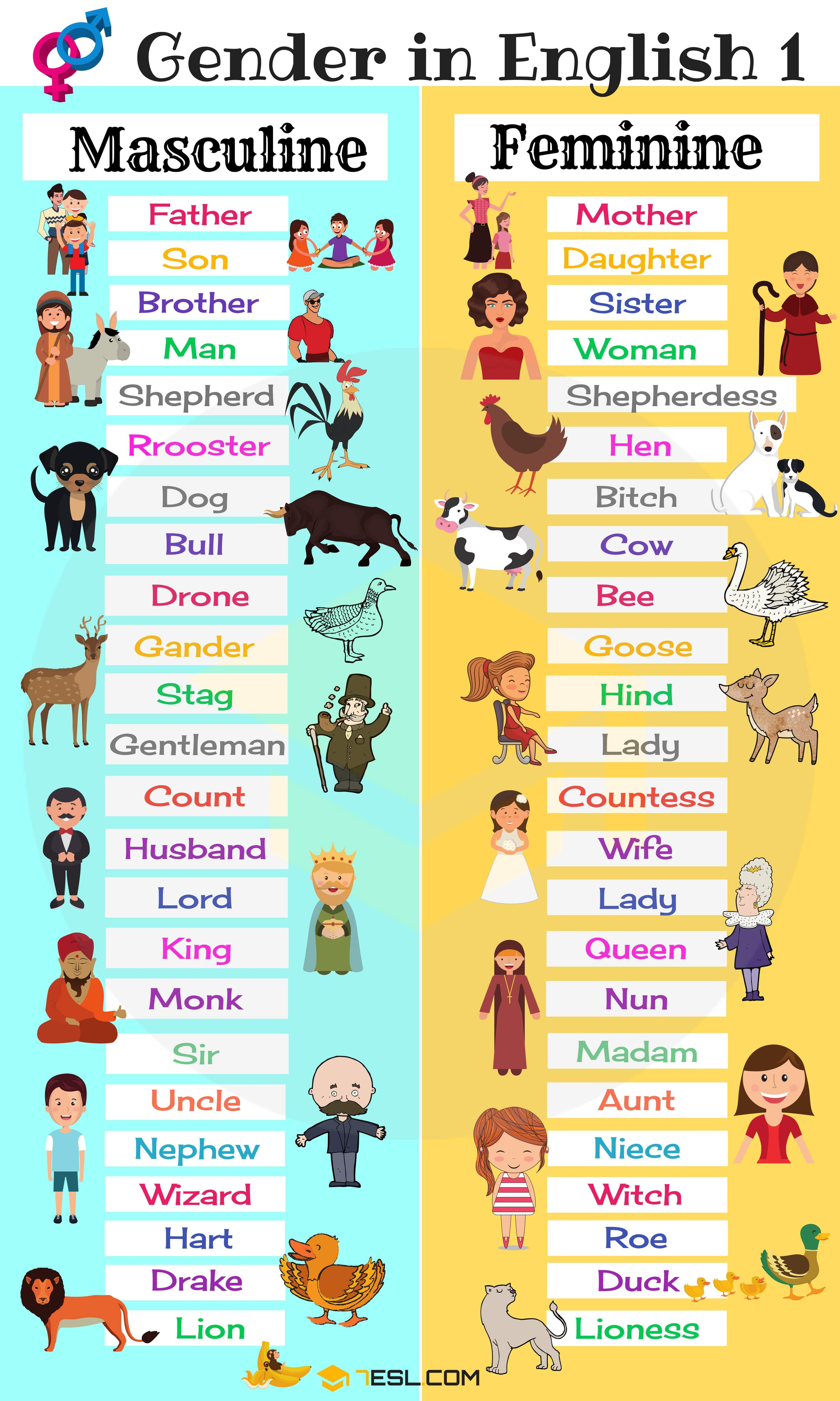 Gender of Nouns: Useful Masculine and Feminine List ...