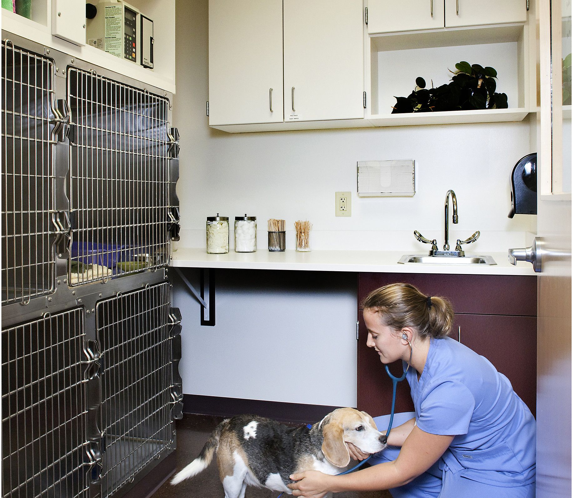 Woodhaven Veterinary Clinic Tour Woodhaven Clinic