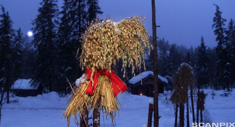"""""""Julenek""""; Wheat offerings to the birds."""