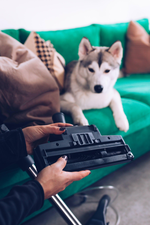 Anzeige Sauberer Haushalt Mit Hund Tierhaarstaubsauger Tierhaarstaubsauger Im Test Tierhaar Staubsauger Thomas Hunde Hund Bellt Staubsauger Fur Tierhaare