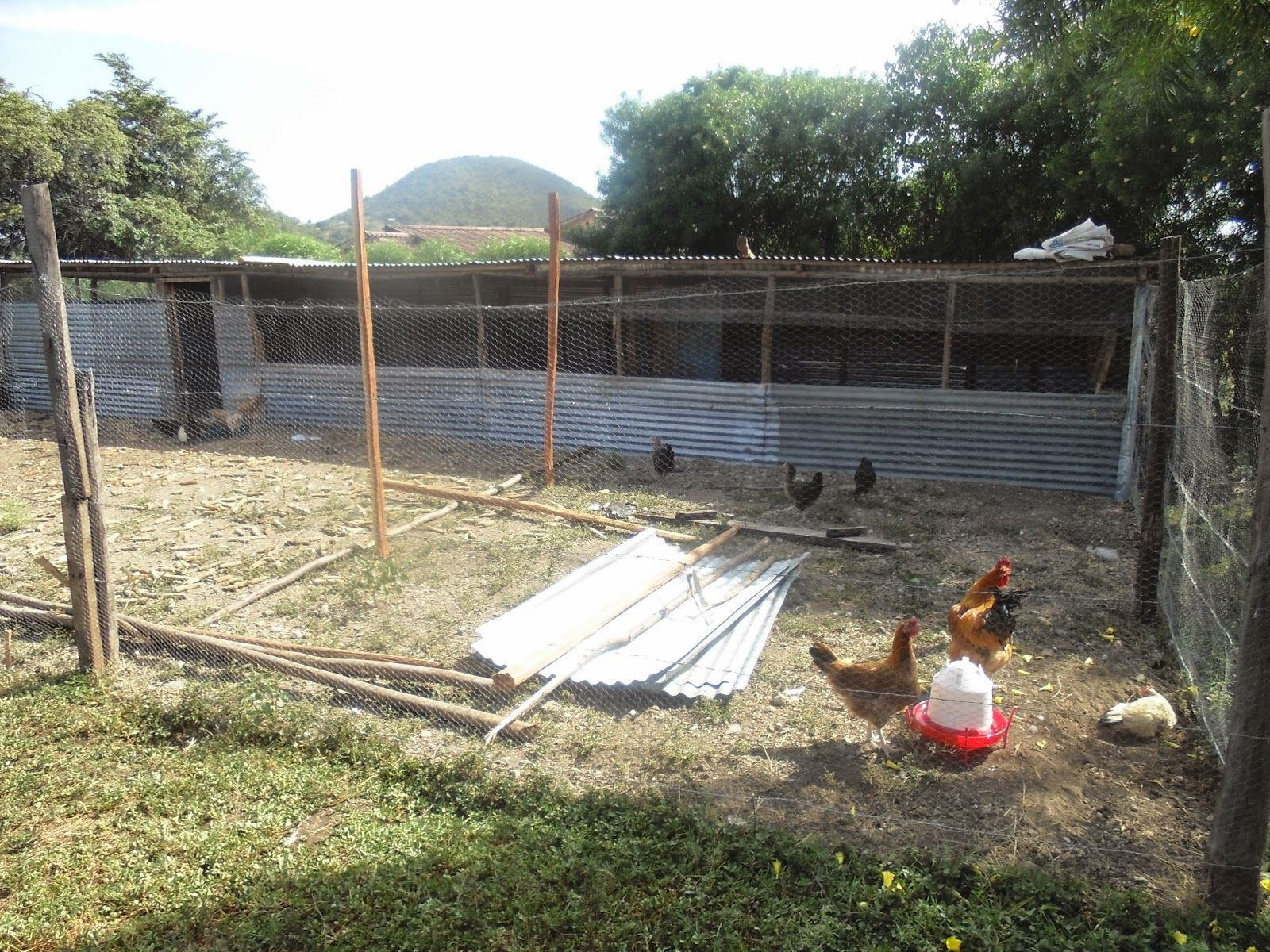 Best Poultry House Plans For 1000 Chickens With Kienyeji Chicken Poultry House Chicken House Garden Ideas Cheap Simple chicken house design for backyard farming